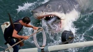A scene from the movie JAWS